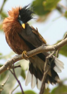 Common Birds of IIT Kanpur     and North India