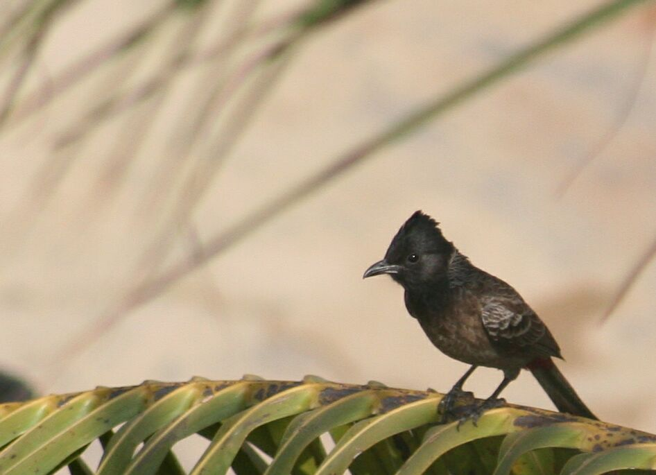 Essay on woodpecker bird in hindi