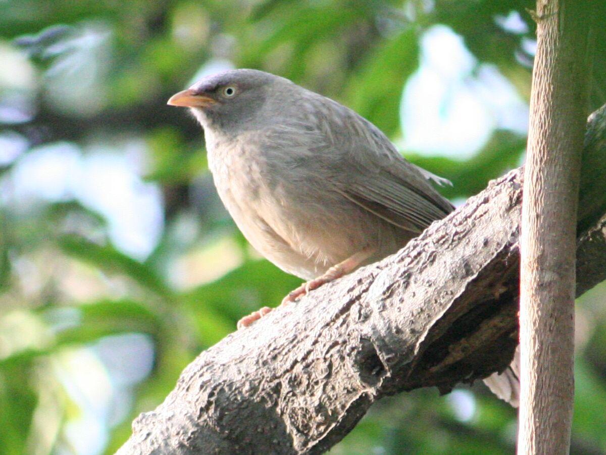 Common Birds of...